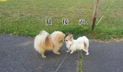 さくらちゃんとハヤテ