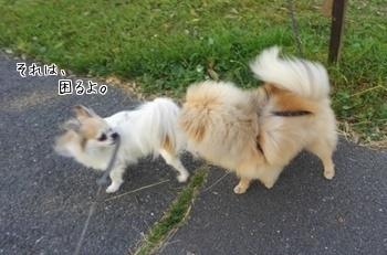 さくらちゃんとハヤテ4
