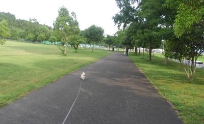 ストーカー散歩