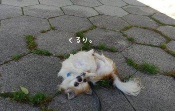 踊るハヤテ4