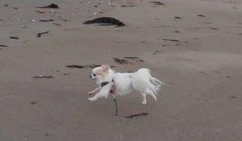 海で走るさくら2