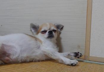 寝るハヤテ