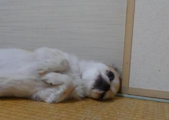 寝るハヤテ2