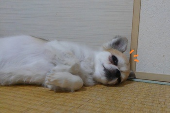 寝るハヤテ4