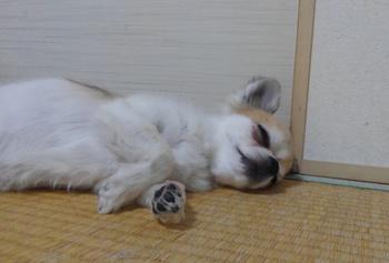 寝るハヤテ5