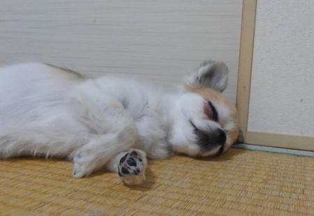 寝るハヤテ6