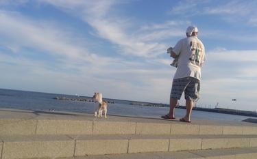 海を見るチワワーズと旦那さん