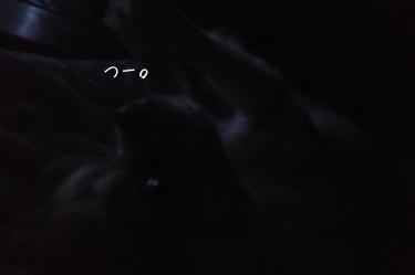 寝ぐずりハヤテ3