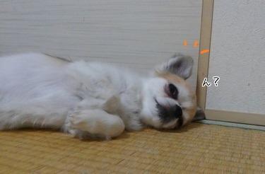 寝るハヤテ3