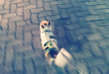 夜散歩中のハヤテ7