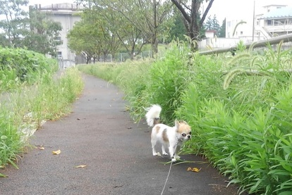 ハヤテの雨の日散歩2