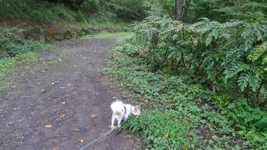 ハヤテの雨の日散歩4