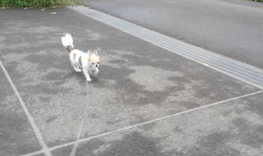 ハヤテの雨の日散歩