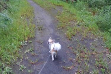 ハヤテの雨の日散歩8