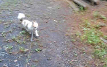 ハヤテの雨の日散歩7