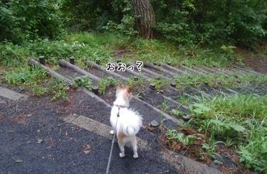 ハヤテの雨の日散歩10