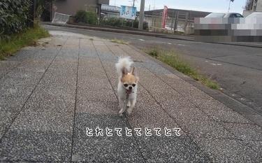 散歩後のハヤテ