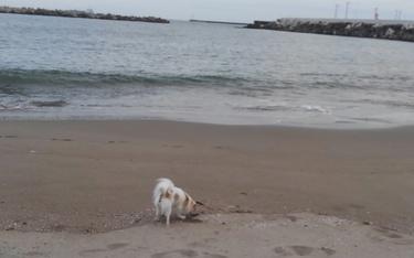 海で遊ぶさくら