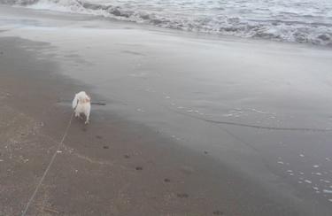 海のさくら