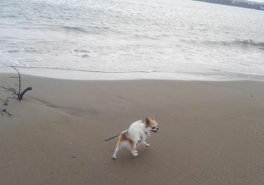 海のハヤテ2