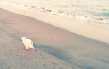 海で遊ぶさくら2