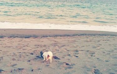 海で遊ぶハヤテ