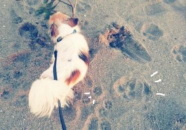 海で遊ぶハヤテ4