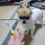 歯磨きハヤテ6