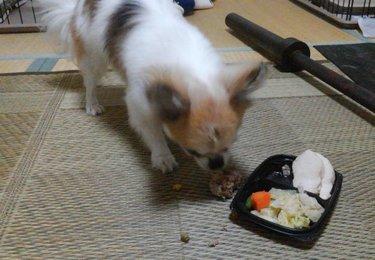 お弁当とハヤテ