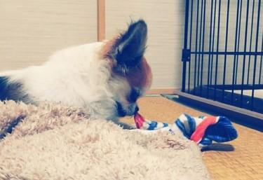 靴下で遊ぶハヤテ3