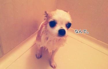 お風呂のさくら