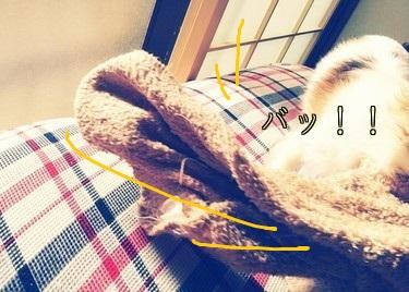 毛布を確保したハヤテ