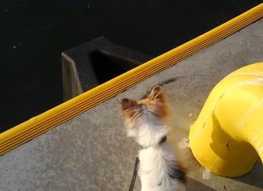 海を恐がるハヤテ