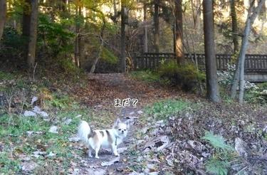 ハヤテと秋散歩3