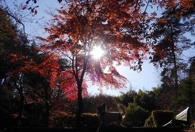 ハヤテと秋散歩