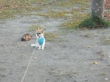 歩かないハヤテ