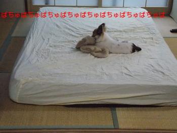 毛布をちゅぱちゅぱしてるハヤテ
