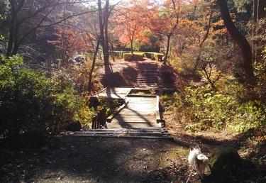 ハヤテと秋散歩5