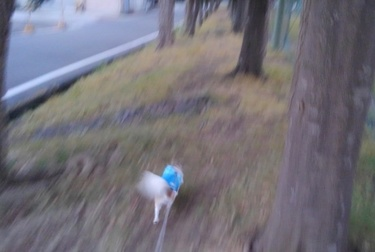 走るハヤテ
