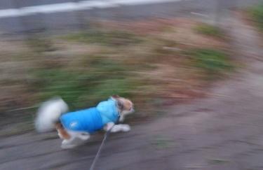 走るハヤテ2