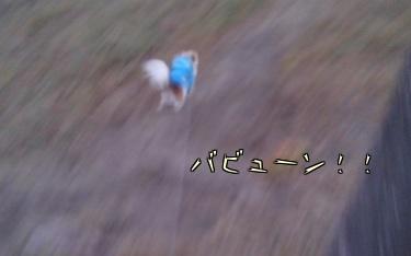 走るハヤテ5