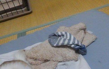 毛布と靴下