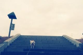 階段を登るハヤテ