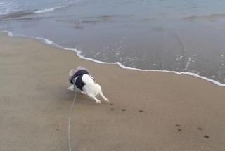 海とさくら2
