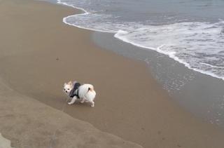 海とさくら3
