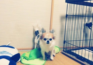 毛布とハヤテ2