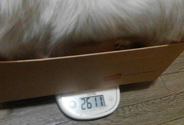 ハヤテの体重