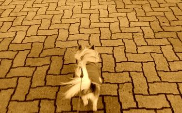 散歩するハヤテ5