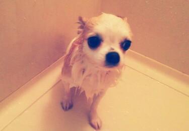 入浴中のさくら