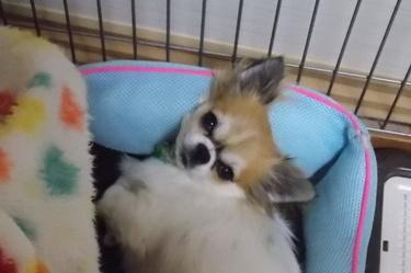 ベットのふちを枕にして寝るハヤテ
